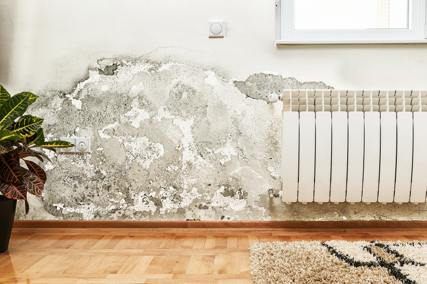 Mold Infested Wall